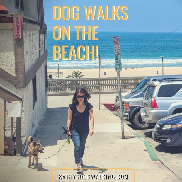 Dog Walks on the Beach - Manhattan-Beach