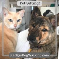 Pet-sitting-dog-pet-boarding-dog-walking