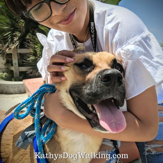 Who's a good boy - ziggy - manhattan-beach - dogwalk